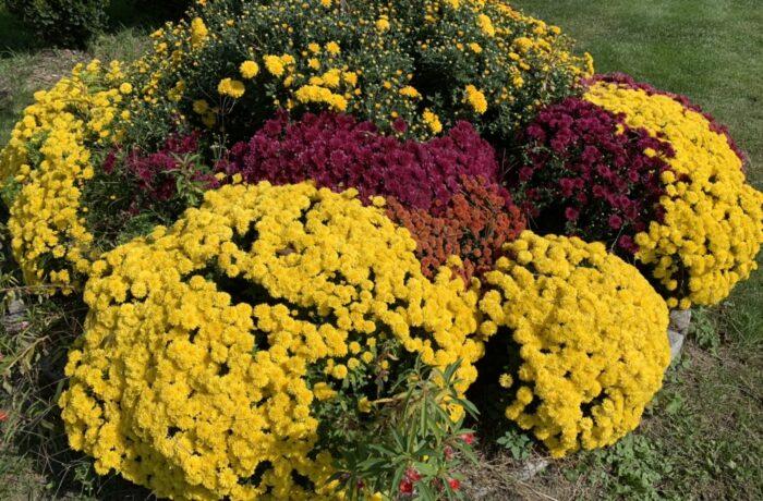 สวนดอกไม้ภายในวัดอัพเดท 2021